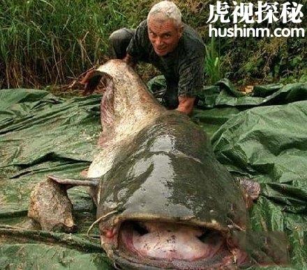 世界5大真正的水中怪兽 你有没有听说过它们