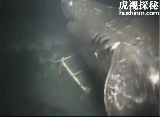 世界五大神秘的海洋生物 冲上海滩的长毛生物