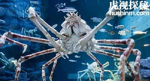 世界六大长相怪异的动物 每一种都是毛骨悚然