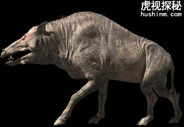 弓颌猪虽然叫做猪但是实际上比猪厉害的多