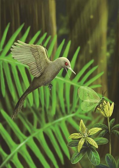 有史以来最小恐龙 恐龙中的一支演化成鸟类