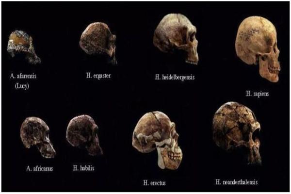 人类将来会朝着什么方面进化 真是脑洞大开