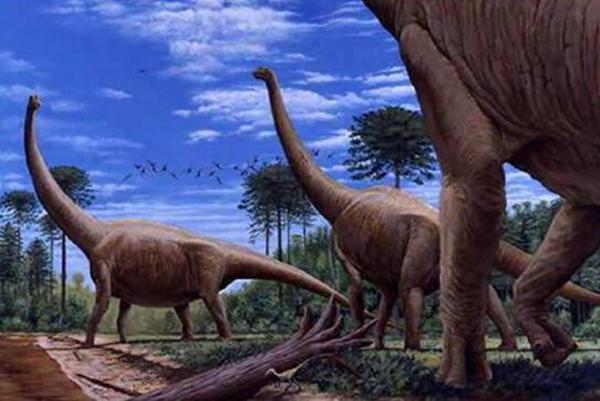 阿根廷龙和腕龙哪个是最大的恐龙呢?看全文