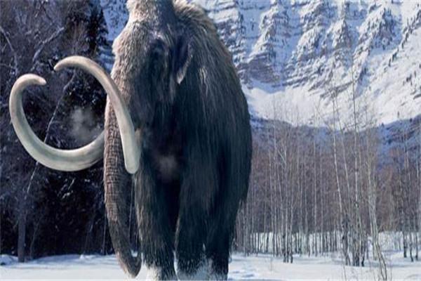 猛犸象灭绝不是突然发生的 是经过漫长的时间
