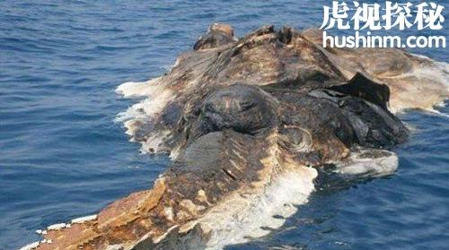 台风登陆的同时 也会带来一些未知神秘生物